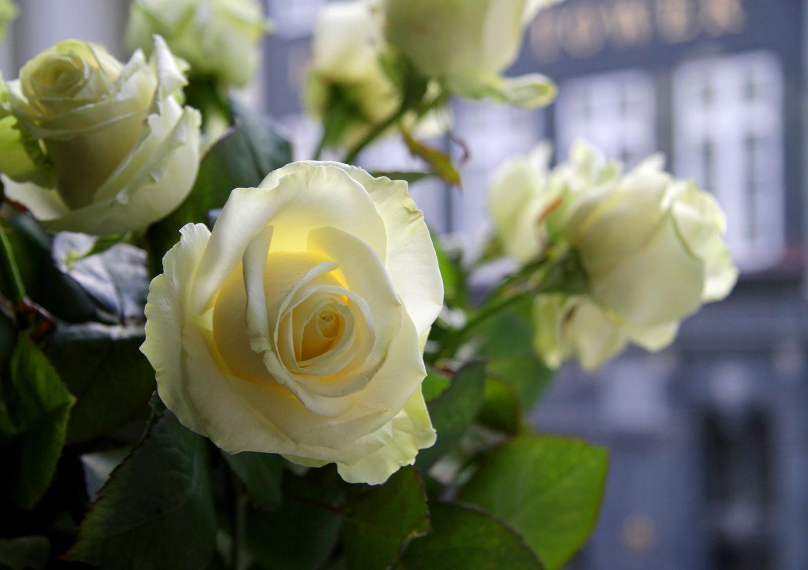 flowers-on-the-windowsill-1633182-1599x1129
